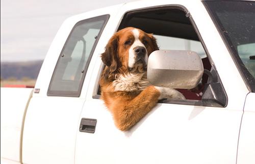 Wenn Hunde Autos testen